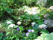 Частный ландшафтный сад для посещений и экскурсий
