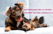 Одежда,  сумки,  переноски,  спальные места  лежанки обувь  для собак кош