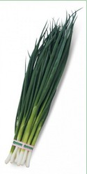 Семена лука на перо VULCAN / ВУЛКАН фирмы Китано
