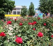 Детский лагерь Гвоздика начинает продажу путевок на сезон 2017 года