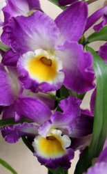 Продам 6 саженцев орхидей в контейнере - 250 грн. Акция!